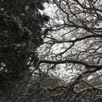 Advent poems 15: 'There was winter's cold and moisture', by Jaan Kaplinski